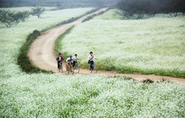 Mộc Châu sắp trở thành khu du lịch mang tầm quốc gia