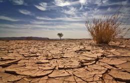 Biến đổi khí hậu và hiểm họa với hệ sinh thái toàn cầu