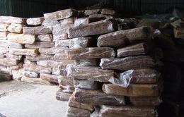 Hàng trăm tấn mủ cao su lậu từ Campuchia tràn sang Việt Nam
