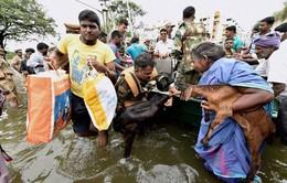 Mưa lớn liên tục gây ngập lụt diện rộng ở miền Nam Ấn Độ
