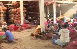 Gần 600 nông dân trồng hành bị các bệnh về mắt