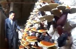 Quảng Ninh: Công nghệ chế biến giúp tăng giá trị nông sản