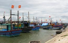 Phú Yên: Thiếu hợp lý trong quy hoạch khu neo đậu tàu thuyền
