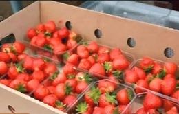 Cấm vận nông sản phương Tây, nhiều nông trại Nga hưởng lợi