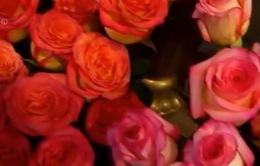 Nga cấm nhập khẩu hoa từ Hà Lan