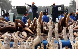 Thái Lan tiêu huỷ 2.155kg ngà voi