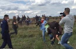 Nữ quay phim Hungary bị sa thải vì ngáng chân người di cư