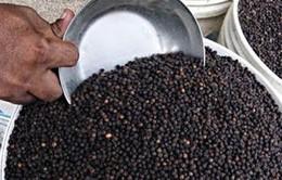 Đồng Nai xuất khẩu gần 900 tấn hạt tiêu với giá cao
