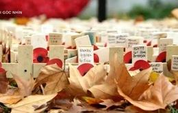 11/11 - Ngày Tưởng nhớ tại Anh