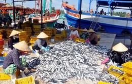 Ưu tiên đầu tư phát triển hạ tầng nghề cá