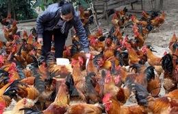 Nghệ An : Không có bệnh nhân nhiễm cúm A/H5N6
