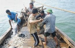 Ngư dân Đà Nẵng yên tâm vươn khơi, bám biển