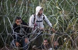 Australia không nâng mức giới hạn tiếp nhận người di cư
