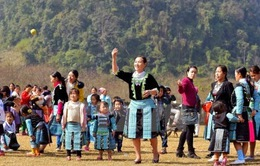 Xuân về trên bản người H'Mông