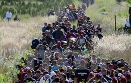 Gia đình người tị nạn Syria tại Đức chờ ngày đoàn tụ