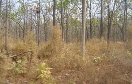 Đồng Tháp: 9 điểm rừng có nguy cơ cháy cấp cực kỳ nguy hiểm