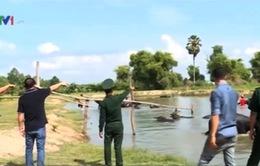 Ngang nhiên buôn lậu trâu, bò ở biên giới Việt Nam - Campuchia
