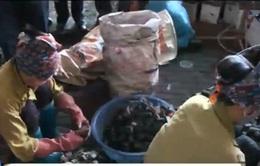 Hưng Yên: Phải di dời khẩn cấp 13 hộ tái chế chì ở làng nghề Đông Mai