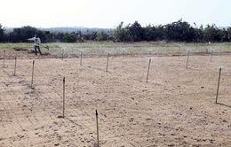 Ninh Thuận: Gia súc chết hàng loạt vì nắng hạn