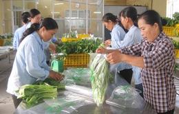 Hà Nội :Triển khai chuỗi cung cấp rau, thịt an toàn