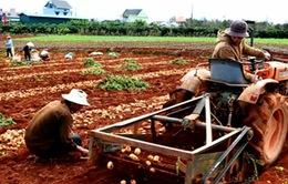 Hơn 80 doanh nghiệp cam kết tiêu thụ nông sản Lâm Đồng