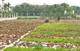 Thu hút DN vào nông nghiệp: Cần những chính sách hấp dẫn hơn