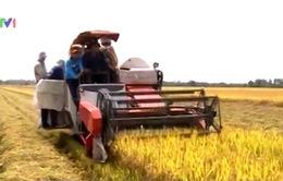 Đầu tư vào ngành nông nghiệp thấp do 3 nguyên nhân