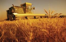Mỹ: Cơ hội lớn cho sinh viên ngành nông nghiệp