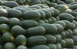 Minh bạch giá nông sản trong mô hình chợ đầu mối