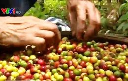 Hàng nông sản ít quan tâm tới thị trường trong nước