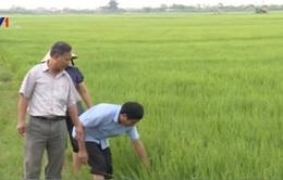Đưa công nghệ Nhật Bản vào nông nghiệp Việt Nam