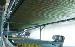 Brazil: Khuyến khích phát triển nông nghiệp hộ gia đình