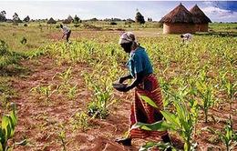 Zimbabwe: Người dân cắt bữa do thiếu lương thực
