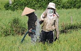 Nguy cơ thiếu nước tưới trầm trọng vụ Đông Xuân tại ĐBSCL
