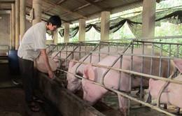 Đình chỉ 2 công ty sản xuất thức ăn chứa chất cấm