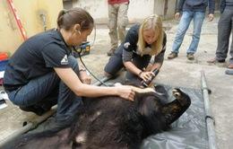 Chuyên gia Hà Lan tâm huyết bảo tồn gấu Việt Nam