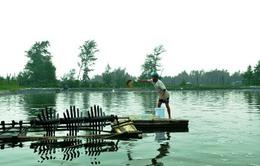Quảng Trị: Nhiều người dân bỏ nghề nuôi tôm do dịch bệnh