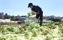 Đà Lạt: Sản lượng rau củ sụt giảm do mưa đá