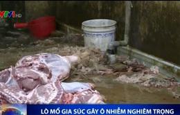 Khánh Hòa: Lò mổ gia súc gây ô nhiễm nghiêm trọng