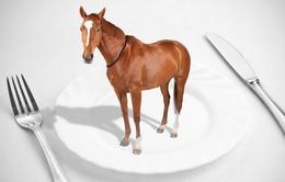 Châu Âu triệt phá đường dây buôn lậu thịt ngựa quy mô lớn