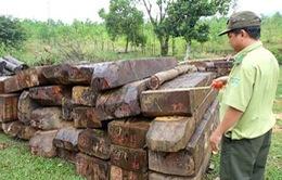 Quảng Nam: Bắt 3 đối tượng trong vụ phá rừng phòng hộ sông Kôn