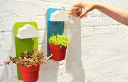 Chậu cây độc đáo làm mới không gian xanh trong nhà