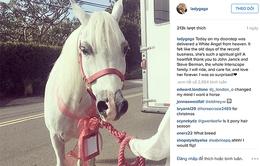 Lady Gaga được tặng ngựa dịp Giáng sinh