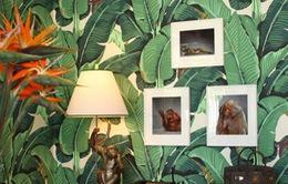 Mang sắc màu nhiệt đới vào nhà