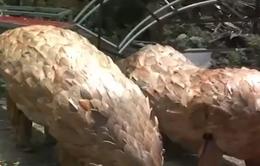 Độc đáo khu du lịch tái chế rác tại Khánh Hòa