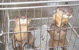Hơn 100 loài động vật hoang dã bị buôn bán trực tuyến ngang nhiên trên Internet