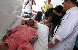 TP.HCM: Số ca nhập viện do rắn lục cắn tăng cao