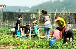 Hàn Quốc: Chính phủ hỗ trợ trồng cây xanh trên mái nhà