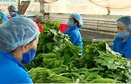 TP.HCM phát triển hệ thống cung cấp thực phẩm sạch