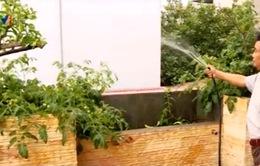 Hà Nội: Nhiều mô hình trồng rau sạch ra đời